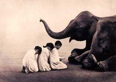 elephant31.jpg (504×355)