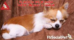NOTIZIA FLASH: Quando l'animale domestico diventa vittima di una separazione
