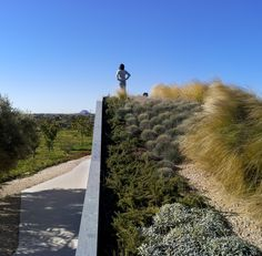 one with the landscape....green rooftop at La Marseta Country House / Sonia Miralles Mud