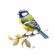 Watercolor Tit Bird Original Painting 7 4/5 x 7 by CMwatercolors