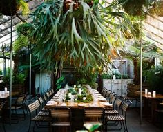 Staghorn ferns create a tropical feel. Terrain at Styer's.