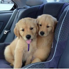 Brother and sister ready for a road trip