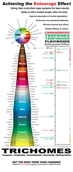 Temperature and Terpene Info-graphic - How to Achieve the Entourage Effect with Cannabis