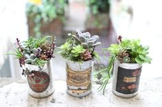 succulents in vintage cans