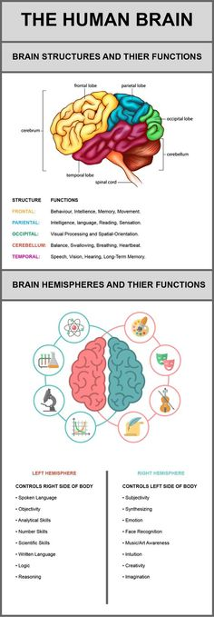 This infographic discusses each of the following structures of the brain and their functions: Frontal Lobe, Parietal Lobe, Occipital Lobe, Cerebellum and Temporal Lobe. It also discusses the right and left hemispheres of the brain and what they are responsible for controlling.:
