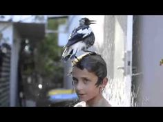 Penguin the magpie takes a shower - Check out this video to see the precious interaction between Penguin and her best little human friend.