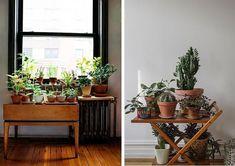 Un rincón para las plantas