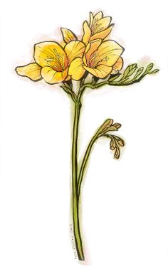 Freesia - Kris Easler Illustration Fresia Flower, Eve Tattoo, March Birth Flowers, Cute Small Tattoos, Botanical Art, Flower Tattoos, Daffodils, Watercolor Flowers, Flower Patterns