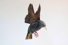 This morning we take a look at some new work form Diana Beltran Herrera. Diana creates some really nice, well-executed paper sculptures of birds and o...