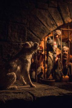 Prison Dog – Chris Marquez