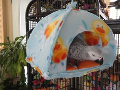 Parrot tent... I need to try to make this.