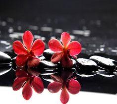 Zen Red Orchid