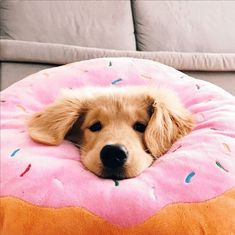 Super Cute Puppies, Cute Baby Dogs, Cute Dogs And Puppies, Doggies, Baby Pig, Baby Animals Pictures, Cute Animal Pictures, Animals And Pets, Animals Images