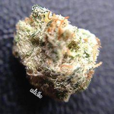 blackberry kush macro.  #mmj #medicalmarijuana #bud #pot #ganja #doja #chronic #cannabis #marijuana #marihuana #cannabisculture #reefer #thc #dank #maryjane #flame #fire #420 #420gram #nug #nugget #cannabiscommunity #kush #blackberrykush #macro #macrophotography #fuzzy #hairy #frosty    #Regram via @cali.thc