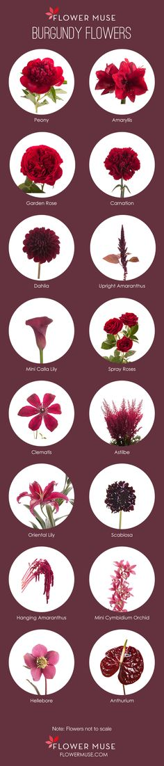 Burgundy Flowers - See all our favorite burgundy flowers on Flower Muse blog.