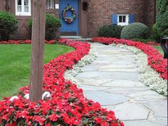 Red New Guinea Impatiens bordered by White Alyssum .. Now that's a walkway!!