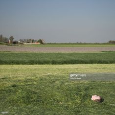 Bury, Any Images, Still Image, Royalty Free Images, Grass, Stock Photos, Photography, Photograph, Grasses