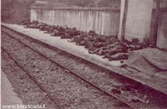 During the overnight hours between March 2 and 3, 1944, a freight train, carrying between 500-600 passengers trying to survive off the 'black market' during World War II, was forced to stop in Balvano, Italy to wait on another train stuck on the tracks. Most of the cars were inside a mountain tunnel slowly being filled with carbon monoxide gas from old used coal. By the time the train was able to move, nearly 450 passengers has silently suffocated from the fumes.