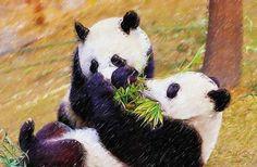 I uploaded new artwork to fineartamerica.com! - 'Cute Pandas Play Together' - http://fineartamerica.com/featured/cute-pandas-play-together-lanjee-chee.html via @fineartamerica