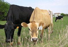 123 Best Iowa images   Iowa, Amana colonies, Dubuque iowa