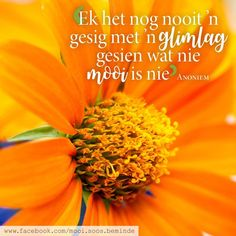 Afrikaans, Words, Image, Quotes, Quotations, Qoutes, Afrikaans Language, Horse, Manager Quotes