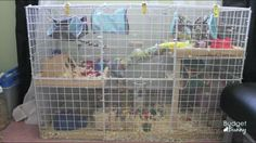 I love this hamster cage idea!!