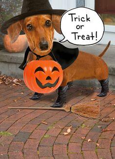 Happy Halloween Weiner Dog