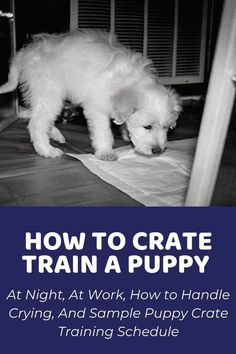 5 Tips For Training Your Puppy… #dogtrainer Petsmart Dog Training, Kennel Training A Puppy, Puppy Toilet Training, Puppy Kennel, Training Your Puppy, Dog Crate Training, Dog Behaviourist, Leash Training, Training Dogs