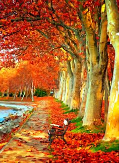 Just pictures ; beautiful and lovely friends no nudity and erotic pictures Fall Pictures, Fall Photos, Nature Pictures, Beautiful Places, Beautiful Pictures, Beautiful Park, Image Nature, Autumn Scenes, Autumn Forest