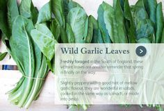 Spring Foraging: Wild Garlic Leaves are here: http://myemail.constantcontact.com/Spring-Foraging--Wild-Garlic-Leaves-are-here--plus-recipes--offers-and-more---Order-by-11pm-tonight-for-delivery-this-week-.html?soid=1102429805135=KuSvJHRsKSA