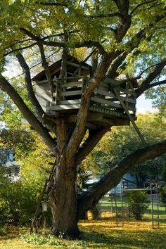 Große schauende Baumhaus gebaut innerhalb der Spidern Äste eines großen Baumes.