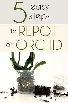 5 easy steps to repot an orchid.