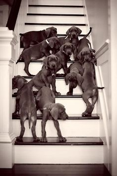 This will probably be my house one day. Full of Great Dane pups or Newfie pups or Saint Bernard pups