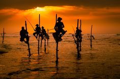 Photograph Traditional Sri Lankan stick-fishermen at the sunset by Val Shevchenko on 500px
