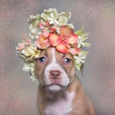 'Pit Bull Flower Power' Already Found Homes For 140+ Pits (New Pics)
