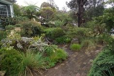Brick with native garden around it - Australian native front garden