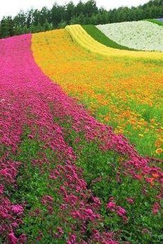 Manteniendos en contacto con la naturaleza y admirando su belleza. Campo de flores de colores.