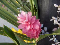 - from the gardens at Jean-Michel Cousteau Fiji Islands Resort.  visit us:  fijiresort.com