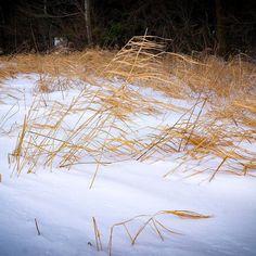 Pünktlich zum Frühlingsanfang zeigt sich der Winter noch einmal... #chiemgau #schnee #snow #winter #ig_bayern #ig_germany #igersgermany #bestgermanypics #srs_nature #exclusive_europe #ig_deutschland #meindeutschland #ig_discover_germany #bestgermanypics #bestofbavaria #wunderbaresbayern #deinbayern #naturelovers #nature #loves_united_germany #srs_germany #srs_nature #spring #frühling