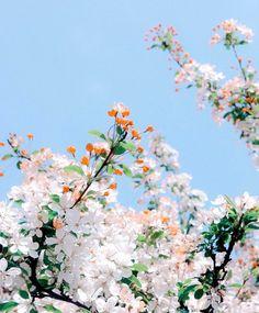 Ғollow мe flor magnolia, special flowers, may flowers, white flowers, My Flower, Wild Flowers, Beautiful Flowers, Peach Flowers, Beautiful Artwork, Fresh Flowers, Spring Aesthetic, Flower Aesthetic, Flor Magnolia