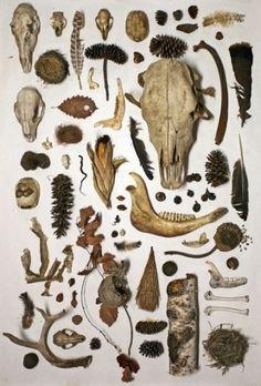 Natural History Collectibles Studio Scavengers by Dolan Geiman Tag Art, Dolan Geiman, Atelier D Art, Animal Bones, Nature Collection, Arte Horror, Skull And Bones, Arm Bones, Natural History