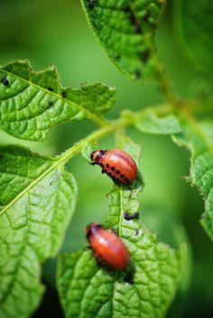 Natural pest control methods that will help make your backyard a Garden of Eden, not a garden that's been eaten!