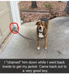 "I'll be right here: | 27 Hilarious Photos That Will Make You Shout, ""I LOVE DOGS, I LOVE THEM SO MUCH"""
