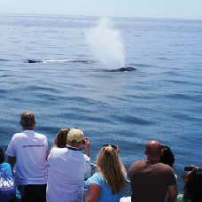 Whale Watching Cruise - included attraction on the Go Los Angeles Card!