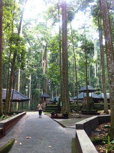 Sangeh Monkey Park in Badung, Bali