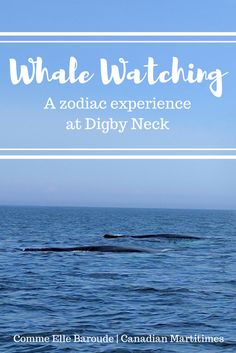 Digby Neck, Nova Scotia, Canada - an amazing experience out in the open sea with a zodiac boat. Captain Tom from Tiverton brought us near to  humpback whales, seals, and porpoises, leaving us with wonder and delight in our hearts!