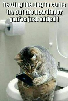 Texting the dog - LOLcats is the best place to find and submit funny cat memes and other silly cat materials to share with the world. We find the funny cats that make you LOL so that you don't… Funny Animal Memes, Cute Funny Animals, Cute Baby Animals, Funny Cats, Cute Cats And Kittens, Kittens Cutest, Kitty Cats, Animal Jokes, Funny Animal Pictures