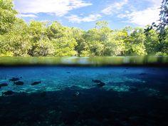 Dois mundos: em um só lugar. Crédito: Raul Delvizio Turismo ecológico em Bonito - MS, passeio de flutuação no Rio da Prata Interessado? Acesse:www.riodaprata.com.br