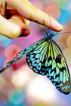 #drawing #art #photography #wallpaper #painting #beauty #photo about life Butterfly Background, Butterfly Wallpaper, Rabbit Carrier, Little Ballerina, Nymph, Moth, Orchids, Insects, Drawing Art