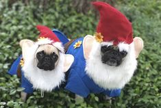 There's gnome doubt about it, PixieBelle & LulaBee are adorable. See more cute photos >>> http://www.thepugdiary.com/social-pug-profile-pixiebelle-lulabee/